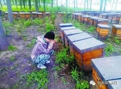 大学生<a href=https://www.zhifujing.org/gushi/ target=_blank class=infotextkey>创业</a>受损 因飞机洒农药致百万蜜蜂死亡
