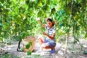 挂科女大学生<a href=https://www.zhifujing.org/gushi/ target=_blank class=infotextkey>创业</a>种30亩菜地 变身蔬菜公主