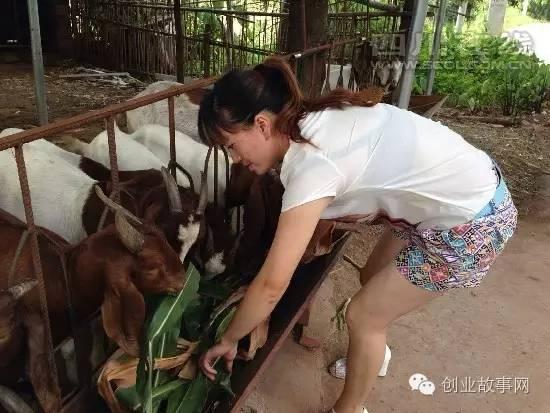 80后女大学生回乡创业<a href=https://www.zhifujing.org/special/yangyang/ target=_blank class=infotextkey>养羊</a> 创收10多万元