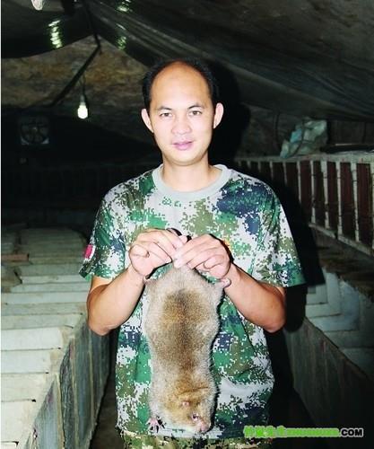 梁秋波在山洞里提着一只重达三四斤的竹鼠