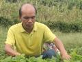 放弃上海高薪工作,回农村种野菜创业