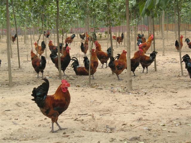 在外打工的农村青年回乡创业,为什么不愿意选择农业项目?