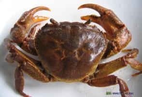 养蟹网――螃蟹养殖技术视频大全、养蟹赚钱的致富故事