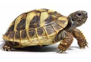 养龟技术,养龟致富,如何养龟,家庭养龟