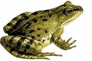 青蛙养殖技术视频