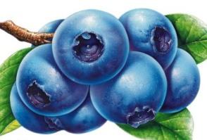 蓝莓发展前景与种植效益分析