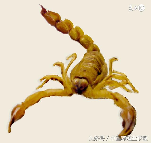 蚂蚁蜗牛蚯蚓的结构图