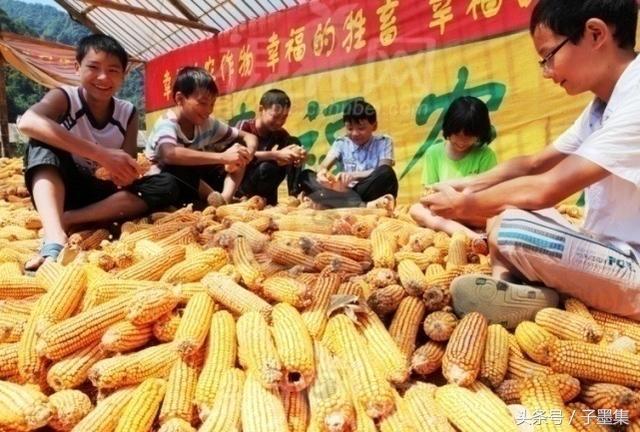 休闲农业10大农事体验,你见过几种?
