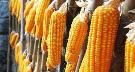 2017年种玉米不能忽视的3件事,否则拿不到补贴!