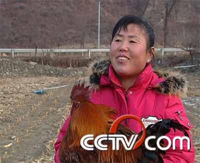 老实人专卖笨公鸡(2009.2.25)