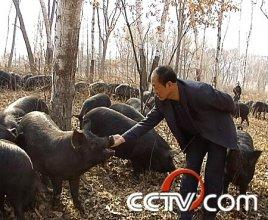 养猪:天价猪肉背后的秘密(4月24日)