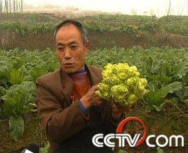 cctv7.com:儿菜俏销的秘密(5月8日)