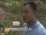 熊润华养竹鼠:从3只小竹鼠开始的财富(2012.04.13)