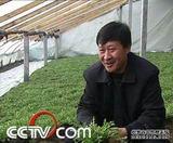 种野菜:畅销的野菜紧俏地卖(2009.2.18)