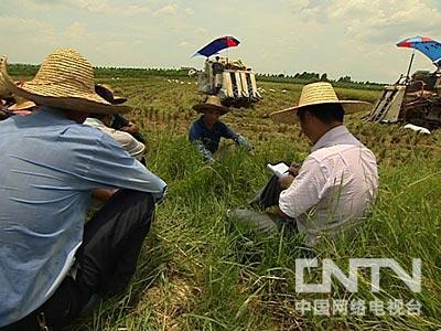 杂交水稻_水稻图片大全_一亩水稻收入