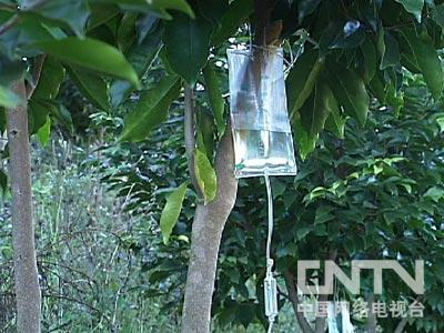 如何种植沉香树_王敏翔种植沉香:生病木头 贵比黄金(2011.2.21)(5) - 三农致富经