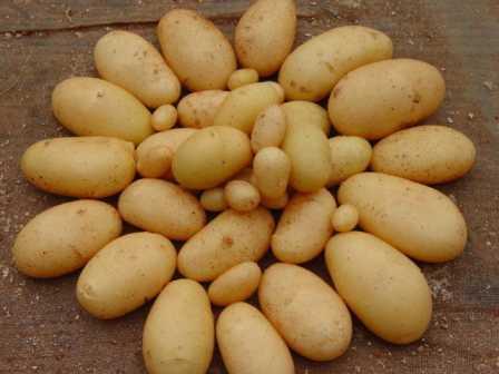 女大学生辞职回乡种土豆