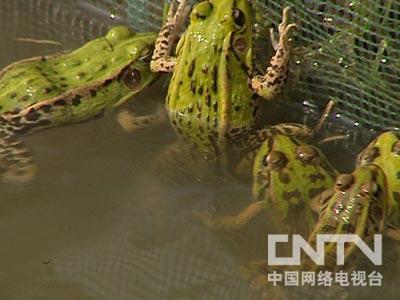 正赶上他在池塘里把冬眠的青蛙提前叫醒