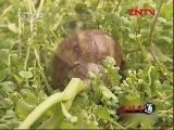 小小蜗牛赚大钱(2011.07.30)