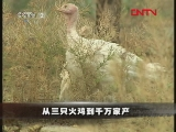 从三只火鸡到千万家产(2011.10.08)