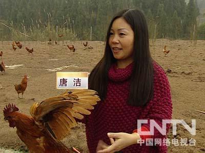 唐洁养土鸡:打工妹在流言蜚语中开始的财富(2