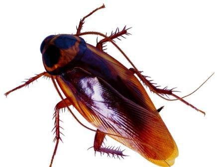 养殖蟑螂也能赚钱