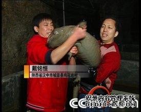 养娃娃鱼:神秘山洞里的娃娃鱼财富(2009.2.3)