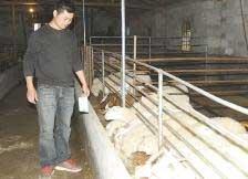 湖羊养在高山 羊粪赚近万元