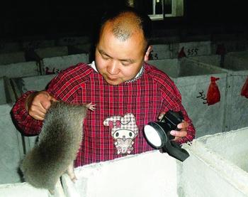 莫孝碑敢想敢干 养<a href=https://www.zhifujing.org/special/zhushu/ target=_blank class=infotextkey>竹鼠</a>年赚100万