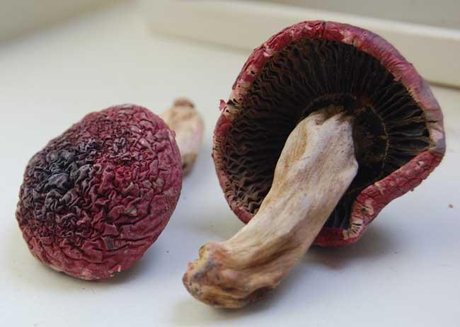 红菇的营养价值
