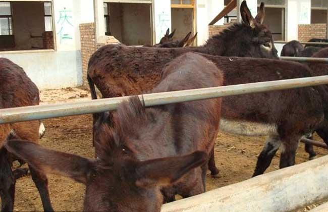 德州驴养殖技术