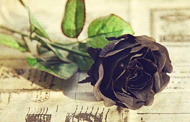 黑玫瑰花语
