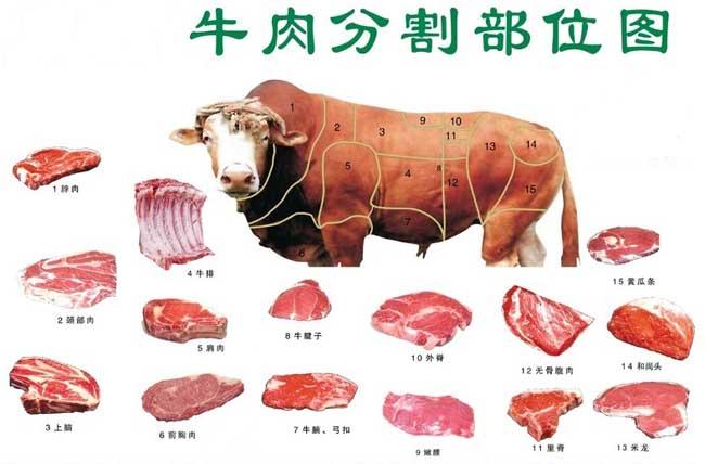 牛的生理解剖图