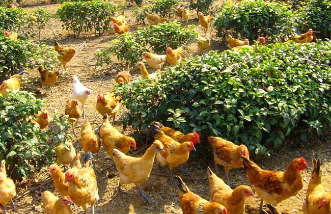 对虾:2018年12月第一周海南省农副产品市场价格涨