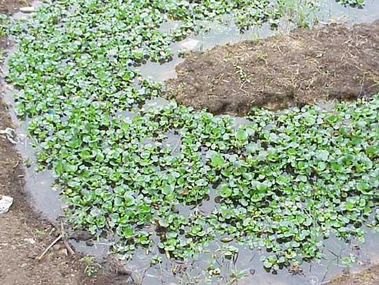 黄鳝网箱养殖手艺