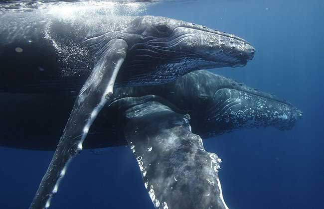 鲸的祖先进化过程图片_鲸的祖先