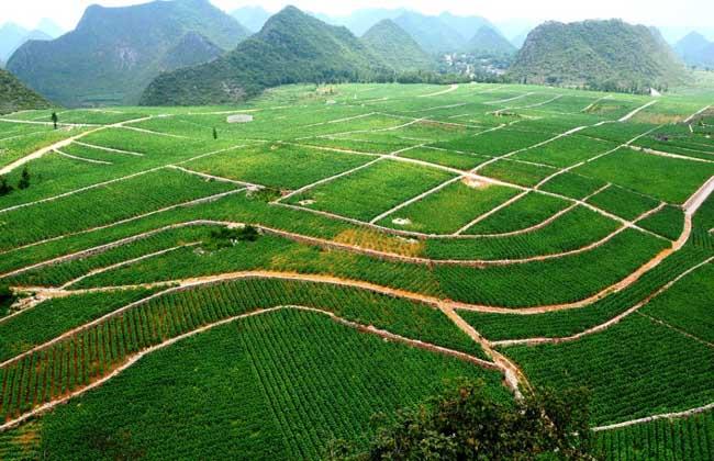 1公顷等于1万平方米_1公顷是多少平方米? - 三农致富经