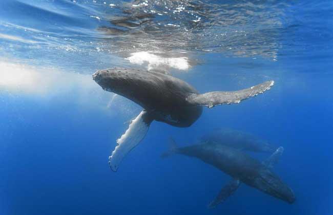 鲸身体部位图解
