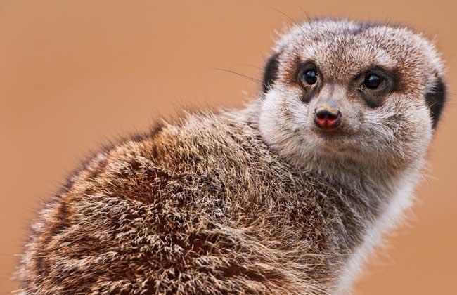 储备食物过冬的动物照片