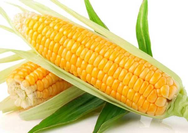 玉米茎初生结构简图