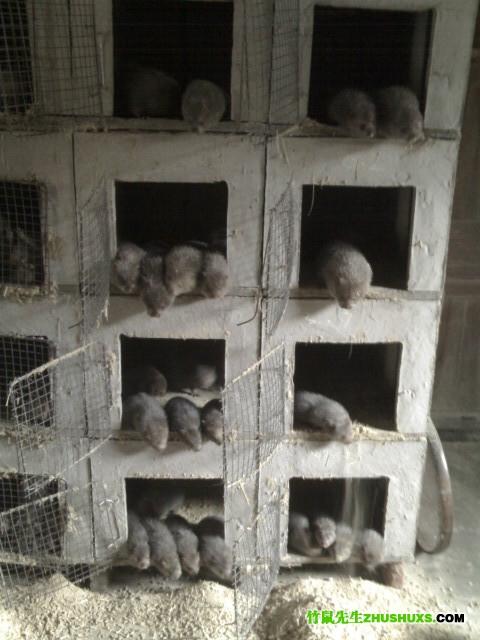 竹鼠饲养池:混合结构多层立体式