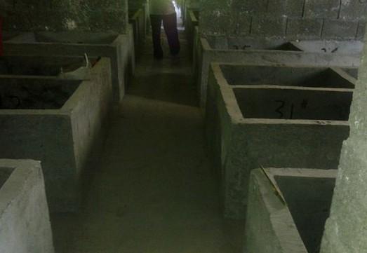 竹鼠饲养池:单层水泥板结构繁殖池