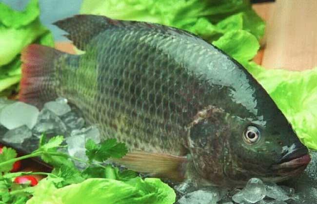罗非鱼多少钱一斤