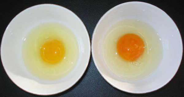 土鸡蛋和普通鸡蛋的区别