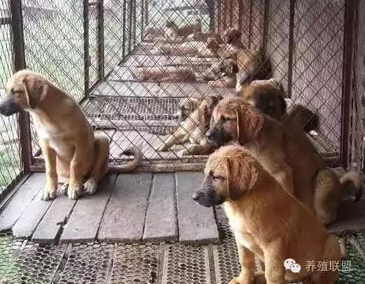 养殖肉狗赚钱吗?