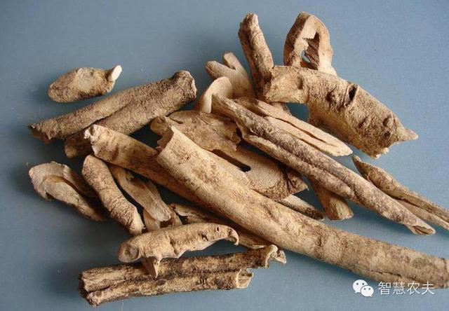 17个适合农村种植的药材品种-丹皮