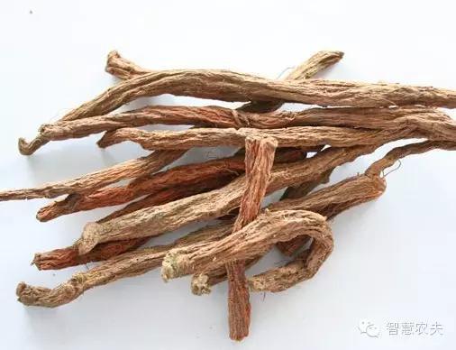 17个适合农村种植的药材品种-丹参