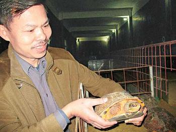 雄性金钱龟产出低 农民试养殖创奇迹