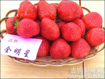 葡萄草莓立体栽 致富脑筋要常开