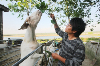 """""""IT男""""回乡养羊 每个月北京供房"""